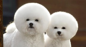 dogs-with-fuzzy-fur
